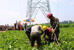 庆安——子仙220千伏线路工程正在放线