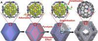 铁钴双原子材料用于氢空燃料电池取得新进展